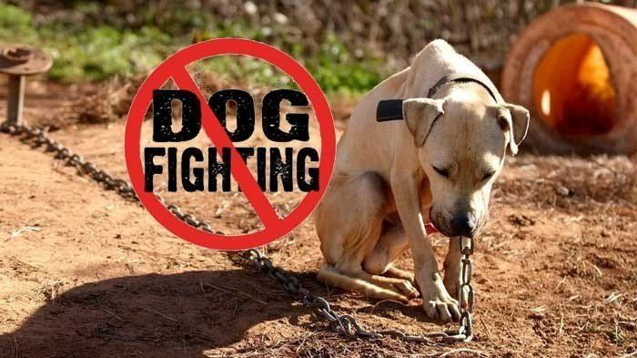"Petition · Sentence to Prison Dog Fighters Convicted of ""Transporting Animals for Fighting Ventures"" · Change.org"