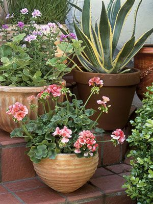 To create contrast and visual vibrancy, situate curvaceous containers on stairs and fill with interestingly shaped plants, from scallop-leafed geraniums to spiky, serrated agave.