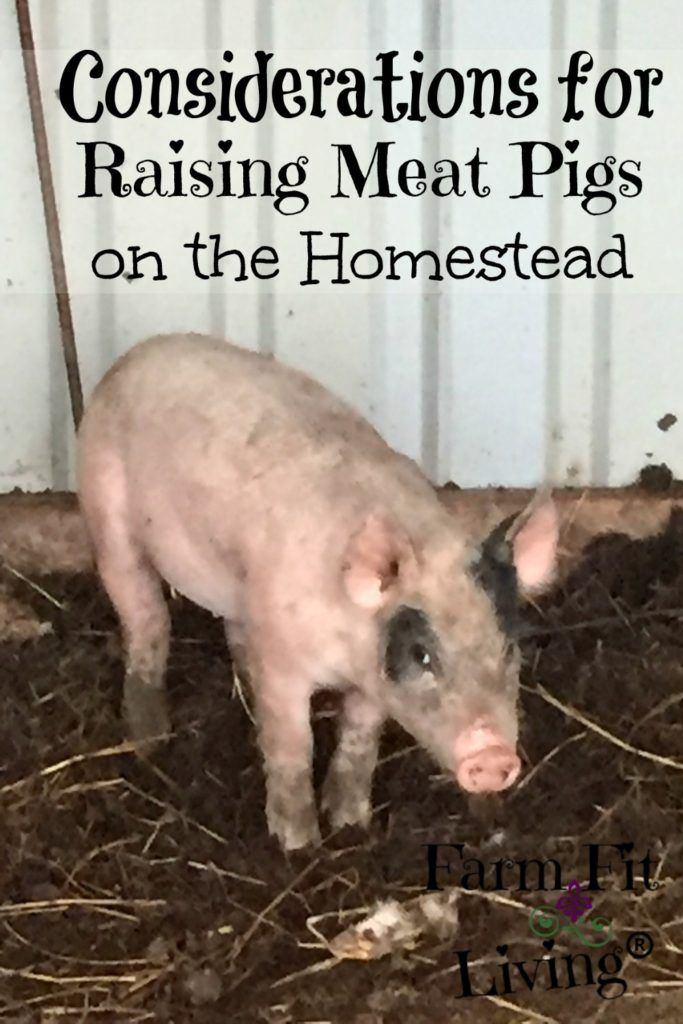 Raising Meat Pigs on the Homestead | Farm Fit Living