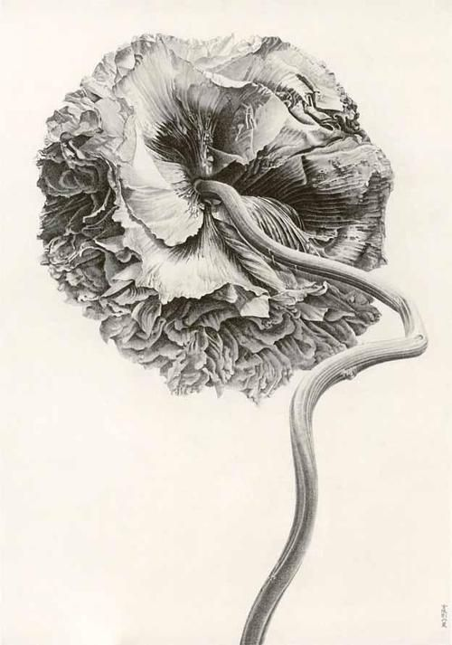 iamjapanese:    Liu Dan(Chinese, b. 1953)  Poppy, yingsu hua   2007  ink on paper    link