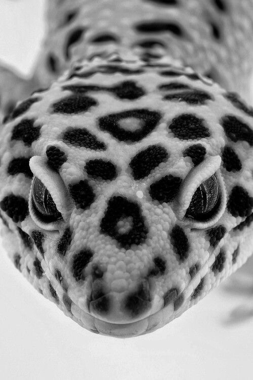 Black and White, reminds me of my old pets...