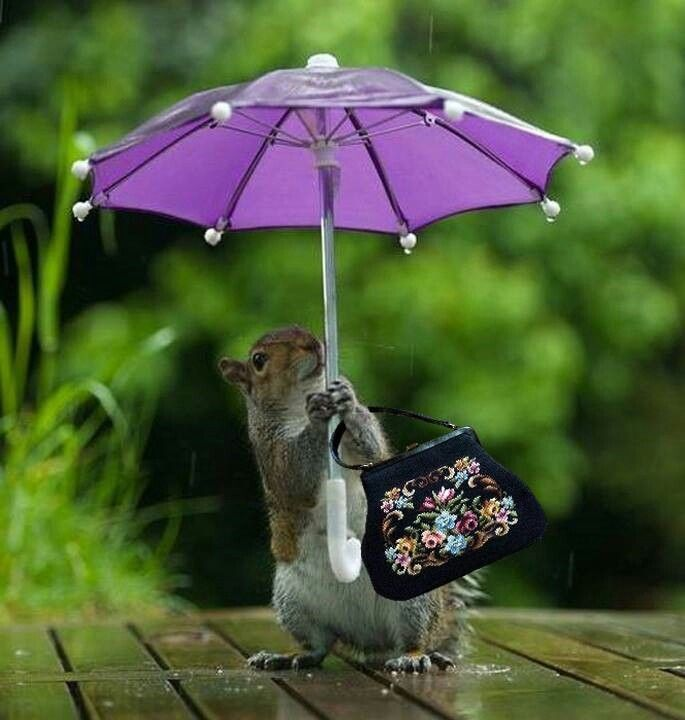 Фото с хорошим настроением в дождливый день