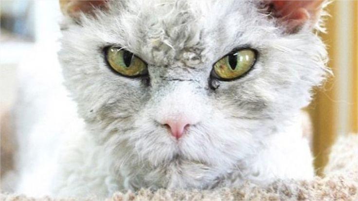 Hola , en este post les traigo 25 cosas que quizás no sabias de tu gato , sin darle mas vueltas , comenzamos 1- Existen más de 500 millones de gatos domésticos, con 40 razas...