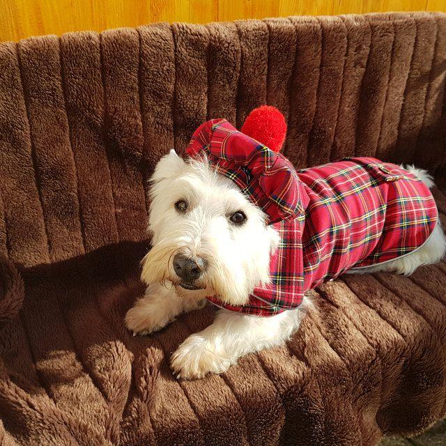 Westie Linen Dress With Bow Dog Dress Westie Dress Dog Etsy Tartan Dog Dog Coats Westies
