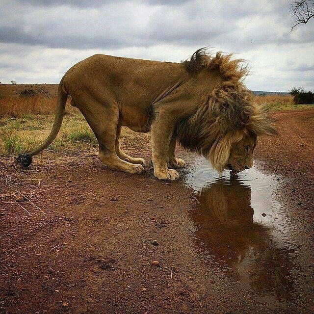 """""""...and as there are times when lepers will eat at the king's table, so also comes a time when kings will drink from a roadside puddle. This, too, is the doing of the LORD."""" - dammy o'"""