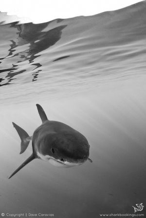 Gansbaai Shark Diving Package | Shark Alley Express | The Roundhouse