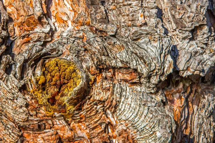theme-details-tree-bark-brown-77967.jpeg (5760×3840)