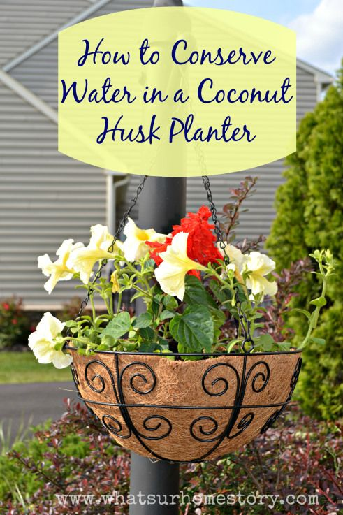 How to conserve water in a coconut husk planter - www.whatsurhomestory.com