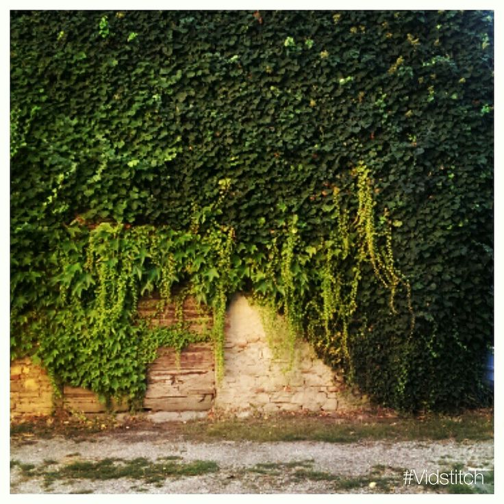 Edere pianta plant leavs green verde natura