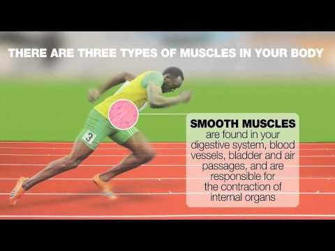Daily Video - Usain Bolt and speed