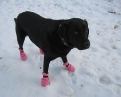 DIY 10 minute dog boots. Fleece or maybe oil cloth, round pieces of suede or durable non slip material, double sided Velcro, and heavy duty thread. Easy!