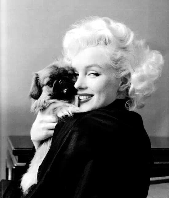 Marilyn and Tibetan Spaniel puppy