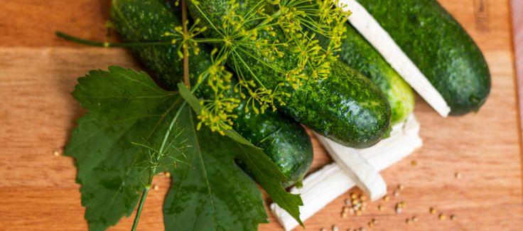 RÝCHLOKVAŠÁKY (uhorky nakladačky, chren, kôpor, soľ, vínne listy, horčičné semienko)