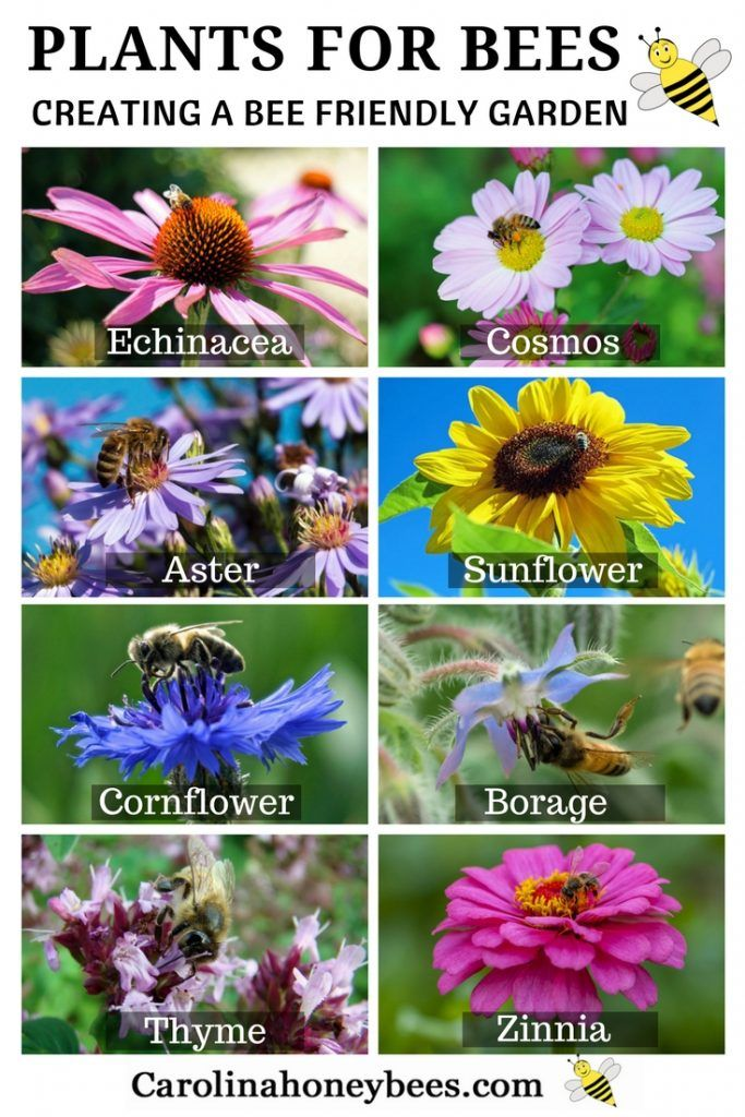 Create a bee friendly garden in your backyard. Choosing plants for bees and other pollinators can be fun.