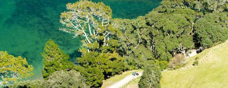 Mount Basetrack, New Zealand #nz #newzealand #bayofplenty