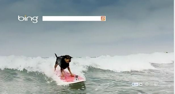 Bing just released this video of a dog surfingSurf Dogs, Bing Image, Originals Content, Dogs Surf