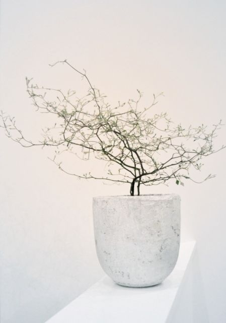 Not a bonsai but would be a cool pot for one eventually