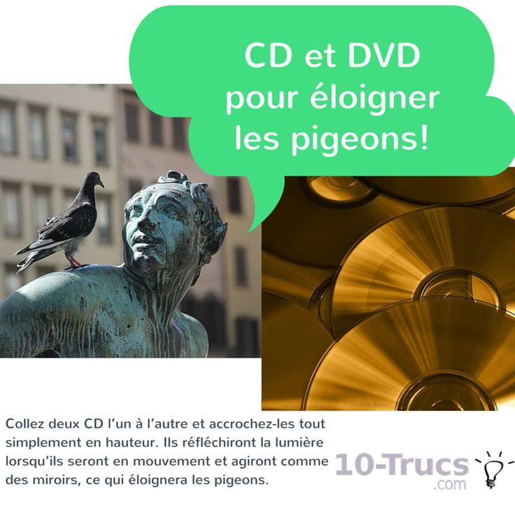 Des CD et DVD pour éloigner les pigeons de votre terrain et toiture!
