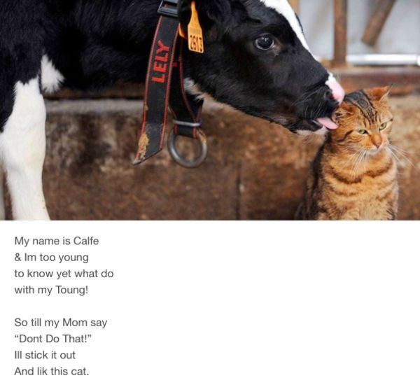 "My name is Calfe | ""i lik the bred"" 