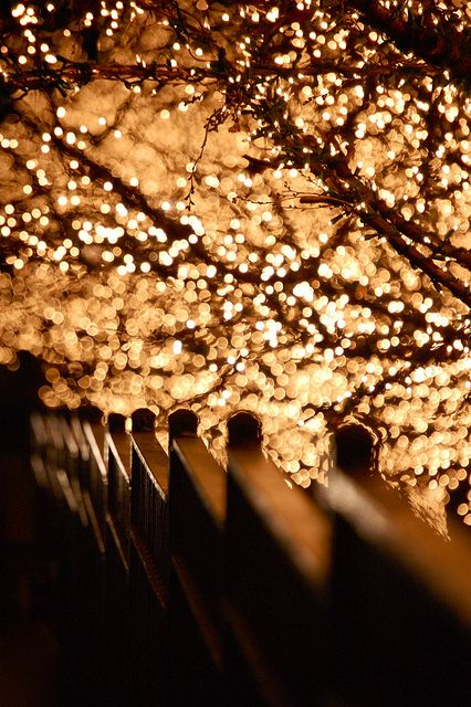 Beautiful flickering lights create a romantic bokeh on E 61st Street, New York City