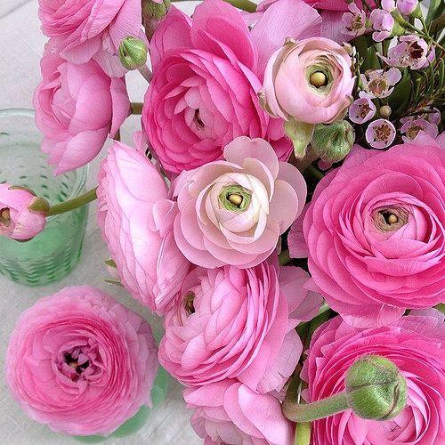 A simple flower arrangement with pink ranunculus