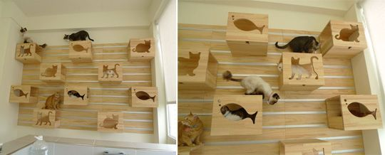 """LOVE IT!  """"...Catswall Design Co, Ltd. of this brilliant new idea for a modular cat climbing wall. It's a set of beautifully crafted wooden boxes that mount on a wall grid so you can move the boxes around to create a modular configuration of climbing, perching, and napping spots for kitty. Only the grid is attached to the wall and the boxes hang on the grid. Great idea!..."""""""