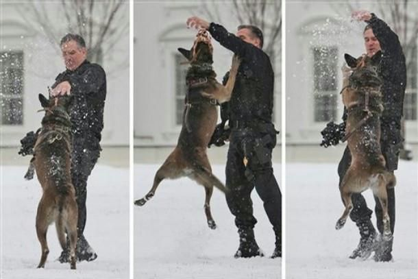 While President Barack Obama was on Capitol Hill meeting with Republicans a Uniformed Secret Service Emergency Response Team officer lets his security dog get some exercise and play in the light snow that covered the White House grounds in Washington, Tuesday, Jan. 27, 2009.