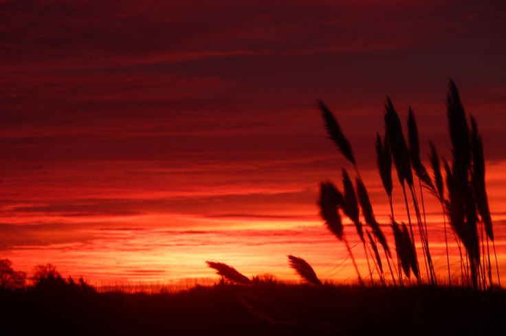 """This was taken the morning before we had terrific storms - so the saying """"Red sky in the morning shepherds warning"""" was all so true. This is a view overlooking Suffolk countryside in East Anglia in the UK"""
