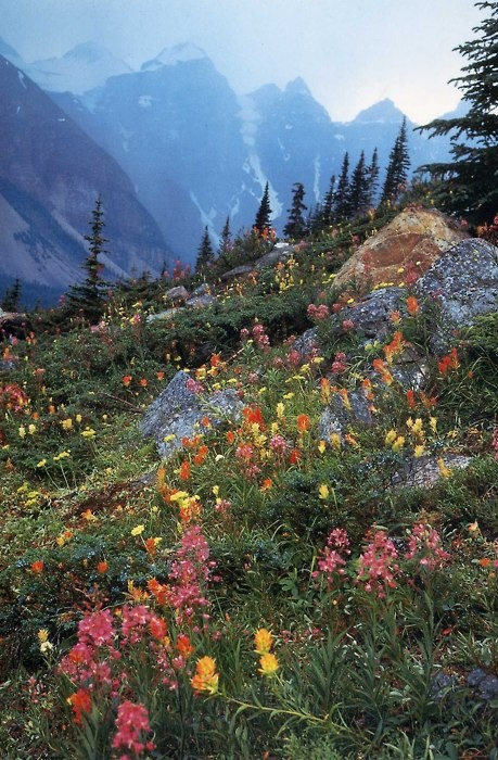 Lovely lovely lovely: Wildflowers, Favorite Places, Nature, Rocky Mountain, Glacier National Parks, Beautiful Places, Landscape, Mountain Side, Wild Flowers