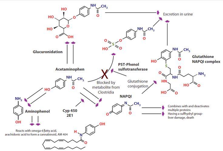 Metabolism of acetaminophen (paracetamol); CYP 450 = cytochrome P450; NAPQI = N-acetyl-p-benzoquinone imine; PST = phenolsulfotransferase.