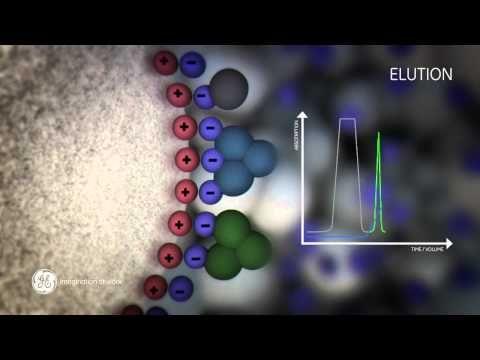 Principles of Ion exchange chromatography