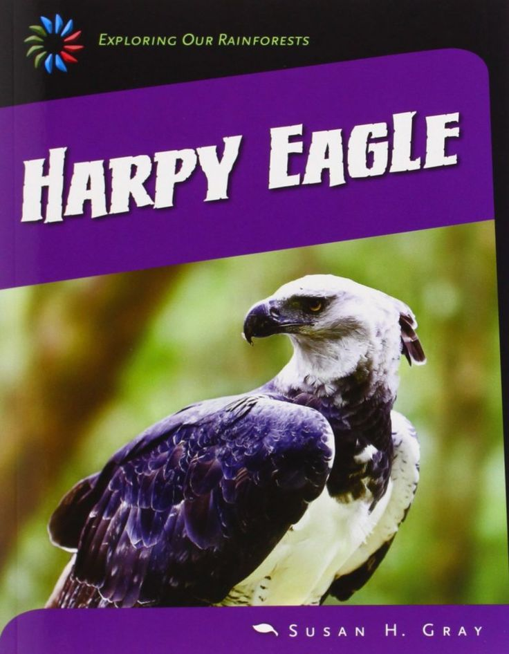 The Emergent Layer is the highest layer of a rainforest. It consist of a few trees that stick up above the canopy layer. Generally the only animals found this high are those that can fly such as birds and bats, including:  1.Harpy Eagles  2.Pygmy Gliders