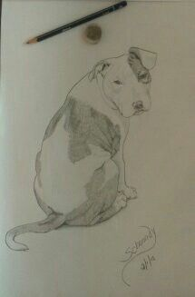 Pencil draw  Schanndy