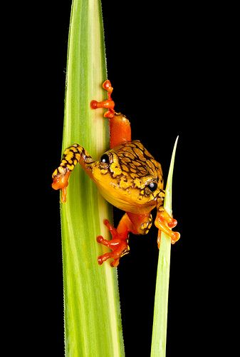 frog I LIKE PINNING WHEN I AM PLAYING ON-LINE POKER...IT KEEPS ME DISTRACTED