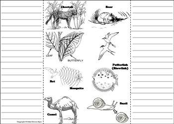 Best 25+ Ecosystem activities ideas on Pinterest
