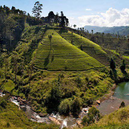 La région des montagnes et Kandy