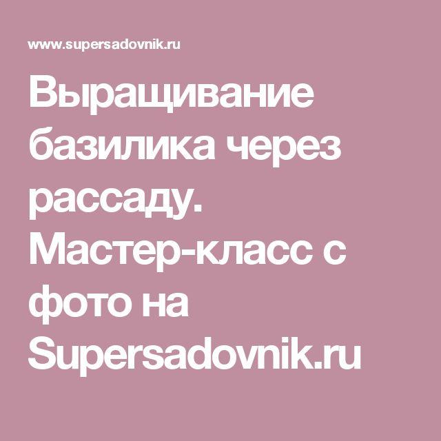 Выращивание базилика через рассаду. Мастер-класс с фото на Supersadovnik.ru