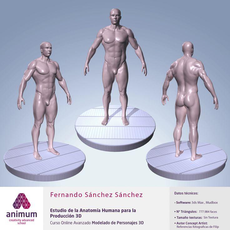 Estudio de la anatomía humana