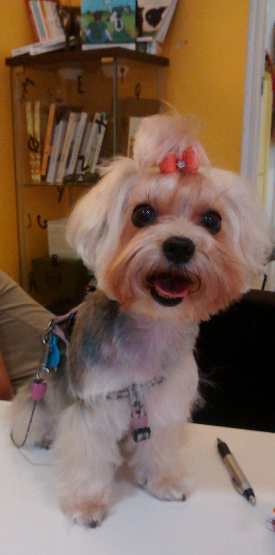 #perros #adiestramientocanino #adiestramiento #peluqueriacanina #getxo #bizkaia #adiestramientocachorros #piensos #bilbao #adiestramientobilbao #mascotas #cachorros