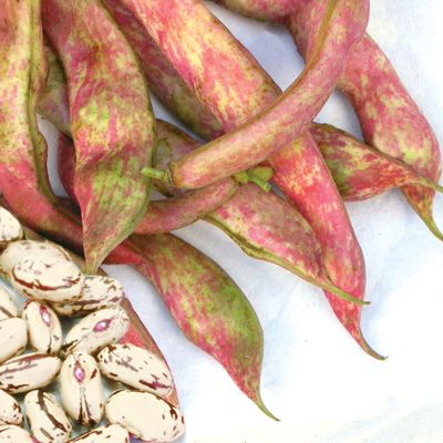 recipe: speckled cranberry pole bean [39]