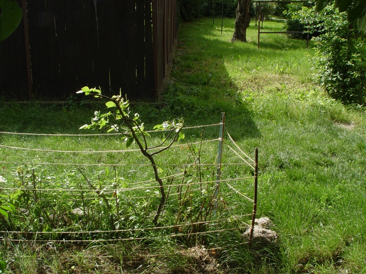 Mojmirova Backyard, Ruzinov (May 2008)