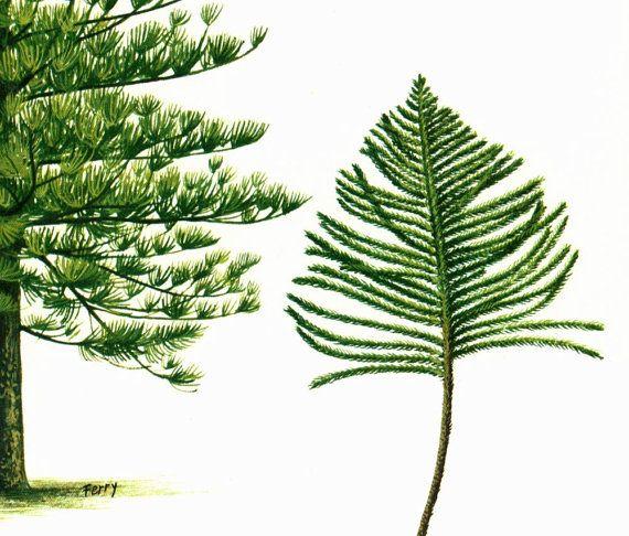 1967 Araucaria Print Vintage Botanical от sofrenchvintage на Etsy