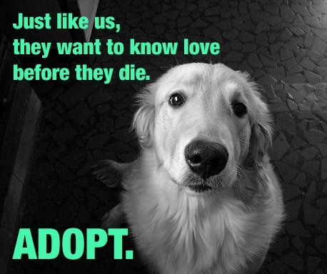 October is Adopt-a-Shelter-Animal Month. Adoption Saves Lives, and One of Those Will Be Your Own. Love Awaits You :-) Please Adopt.