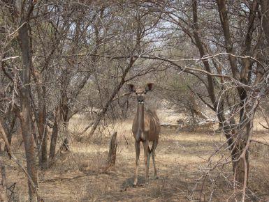 Caprivi e Victoria falls #namibia # caprivi #victoriafalls #giruland #diariodiviaggio #community #raccontare #scoprire #condividere #travel #blog #food #trip #social #network #panorama #fotografia #donna #uomo #trekking #visitare #gratis #lowcoast #tropicale #leone #ghepardo #elefante #giraffa #ippopotamo #scimmia #coccodrillo #serpente