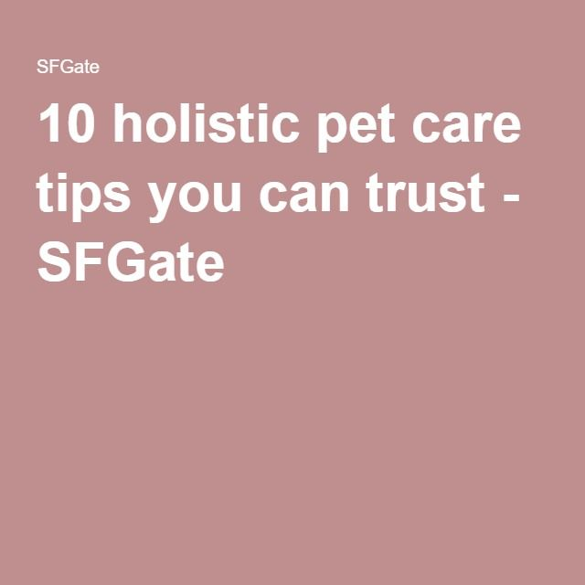 10 holistic pet care tips you can trust - SFGate