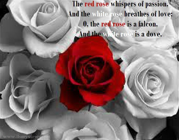 images of roses with quotes all friends are express