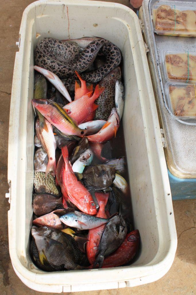 Il faut arriver tôt au marché de #poissons! #Tonga