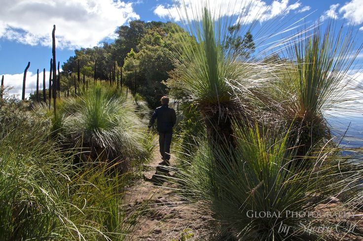 Pioneering the Scenic Rim Trail - Hiking to the Mt. Mitchell Lookout