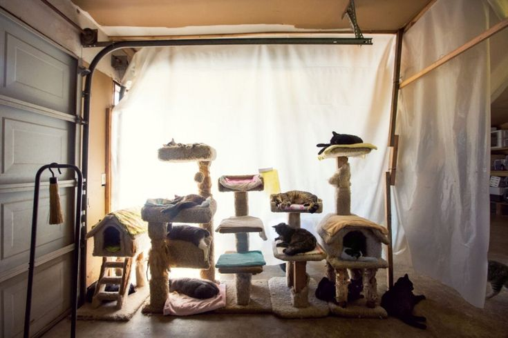 """Il paradiso dei gatti è in California, nella città di Parlier. Ha già salvato oltre 20mila animali e con i suoi 12 acri di terra è il più grande rifugio per gatti del mondo. Attualmente ospita 700 esemplari, tra cui anche qualche cane. """"Se non hanno una casa,"""