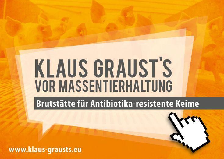 Klaus graust's vor Massentierhaltung und multiresistenten Keimen